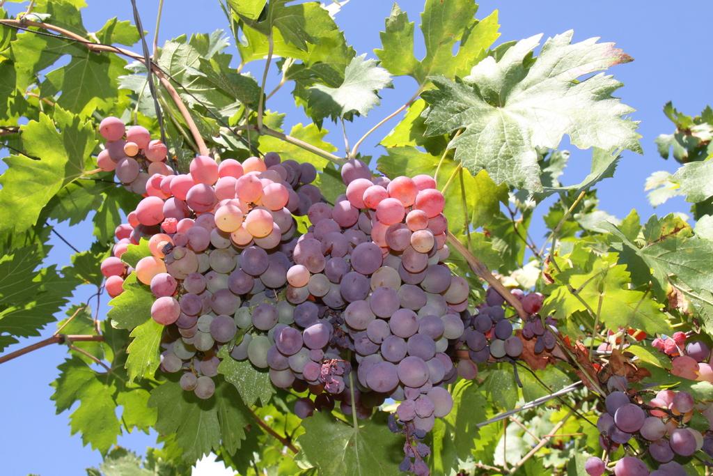 Le vin: Une pénurie prévu pour fin 2019?